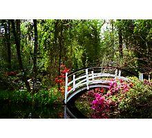 Magnolia Bridge No. 3, Charleston, SC Photographic Print