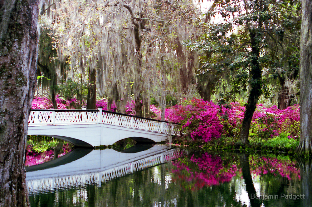 Magnolia Bridge No. 4, Charleston, SC by Benjamin Padgett