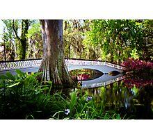 Magnolia Bridge No. 2, Charleston, SC Photographic Print
