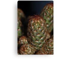 Cacti Macro. Canvas Print