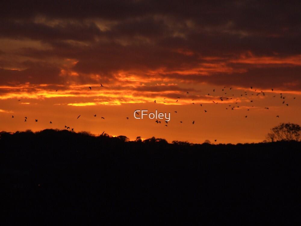 Birds in a Fire Sky by CFoley