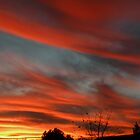 Feathered Orange Clouds by Winona Sharp