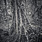 Tree roots by David Petranker