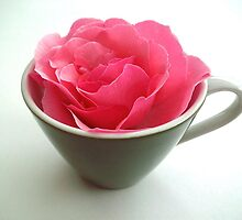 Demitasse Rose by Victoria McGuire