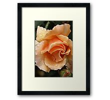 A Touch Of Sunshine Framed Print