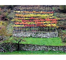 Vineyard in the southern Dolomites Photographic Print