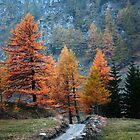 Fall trees  by Stefano  De Rosa