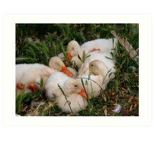 Snuggling Ducklings Art Print