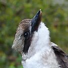 Kookaburra Portrait 4 by Trish Meyer