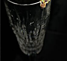 Champagne Frog by Kym Howard