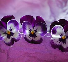 Butterfly Pansy's  by Lozzar Flowers & Art