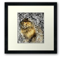 Warming up! Framed Print