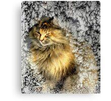 Warming up! Canvas Print