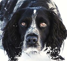 Snow bored by Alan Mattison