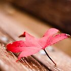Leaf on a Bench - Castelnau-le-Lez, France - 2009 by Nicolas Perriault