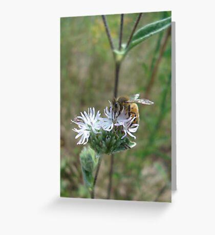 Honeybee in Elephant's Foot Greeting Card