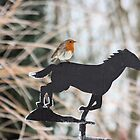 Winter Robin by Pamela Jayne Smith
