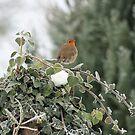 Robin Redbreast by Pamela Jayne Smith