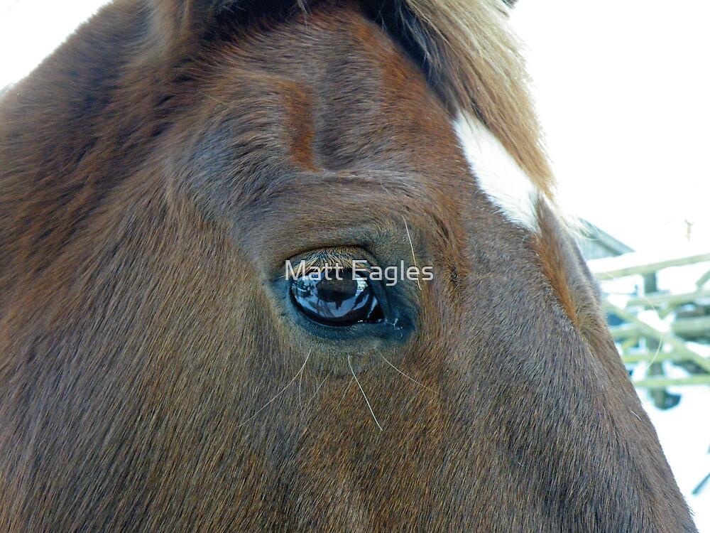 Beauty is in the eye by Matt Eagles