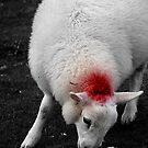 redneck_sheep by staz