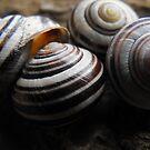 Swirl by Tracy Wazny
