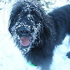Snow Dog by Harri