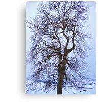 The Snow Tree Canvas Print