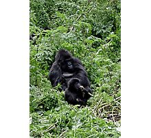 Gorilla mother and child Photographic Print
