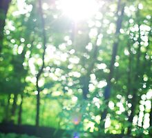 Green bokeh by photographyjen