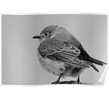 Little Bird in Winter  Poster
