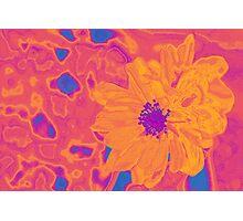 Pop Poppy Pop Photographic Print