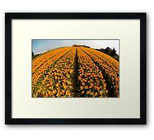 World of Tulips Framed Print