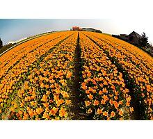 World of Tulips Photographic Print