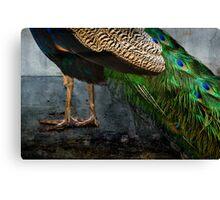Peacock Feet Canvas Print