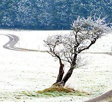 Winter Tree by Honor Kyne