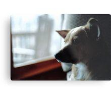 Rosie Looking through the Window Metal Print