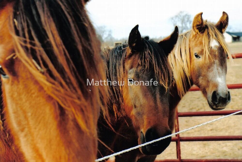 The Three Horses by Matthew Bonafe