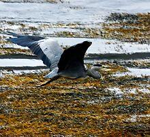 Heron leaving by SWEEPER
