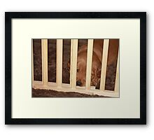 I Promise NOT To Misbehave! Golden Puppy '10 Framed Print