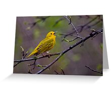 Male Yellow Warbler Singing - Mud Lake, Ottawa, Ontario Greeting Card