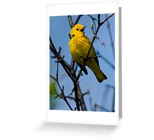 Male Yellow Warbler Singing -  Ottawa, Ontario - 2 Greeting Card