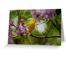 Male Yellow Warbler in Lilacs -  Ottawa, Ontario Greeting Card
