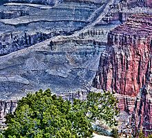Canyon Trees - Pseudo HDR by Doug Greenwald