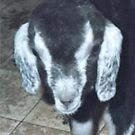 Boo,My Baby Goat by MaeBelle