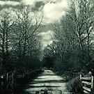The Path I Walk by Kim Shillington