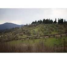 Olive Tree Hills Photographic Print