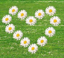 Flower heart from white daisy. by Ligak