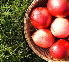Red apples in grass. by Ligak