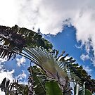 A Palm Reaching for the Sky by Memaa