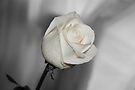 White on White by Sandy Keeton